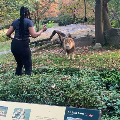 В зоопарке Нью-Йорка женщина танцевала в вольере с африканским львом