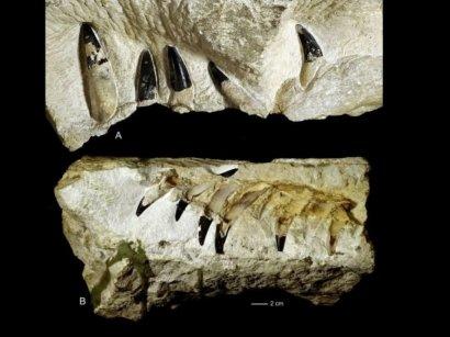 Ученые обнаружили останки древнейшего морского чудовища