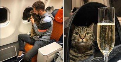 Котообман: как кот стал авианарушителем! ВИДЕО