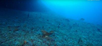 Мировой океан теряет кислород  ВИДЕО