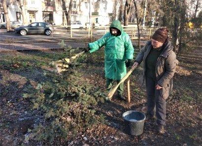 Одесские озеленители защищают зеленые насаждения от вандалов