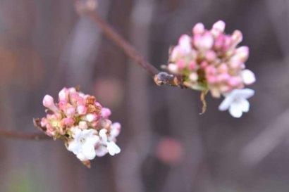 В Запорожье зацвели весенние цветы