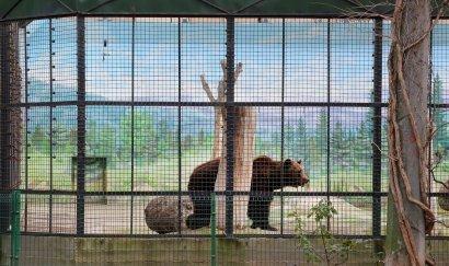 В зоопарк будем заходить с другой стороны