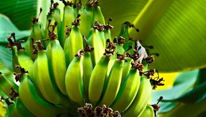 Минздрав опровергает фейки о коронавирусе в посылках из Китая и бананах