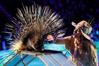 Без животных: циркам Украины дали год на обновление шоу-программ