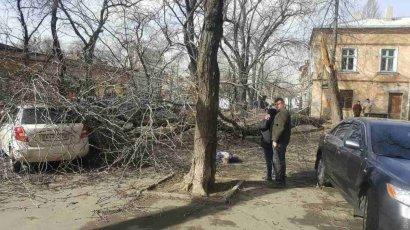 В центре города упавшее дерево убило человека
