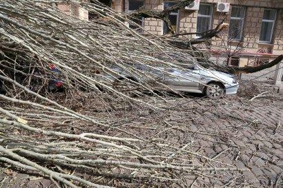 Два рядом стоящих дерева придавили сразу семь автомобилей в Покровском переулке