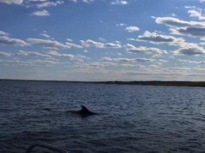Под Николаевом ищут заплывшего в реку дельфина